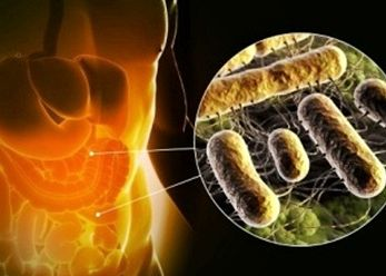 Bacterias intestinales perjudiciales para la visión