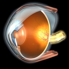 2017. Año de la retina
