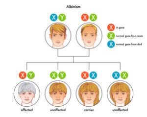 albinismo gen